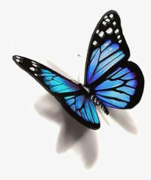 Butterfly 3d Images PNG Images.
