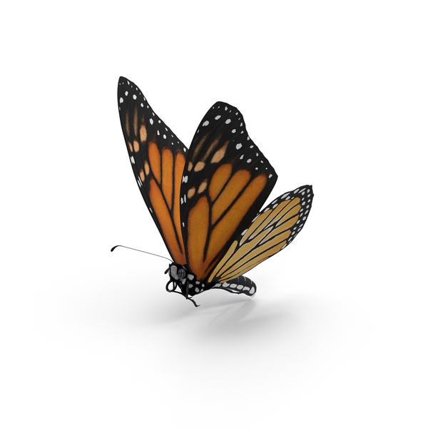 Monarch Butterfly PNG Images & PSDs for Download.