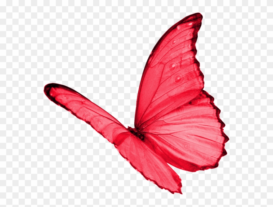 Papillon Clipart Red Butterfly.