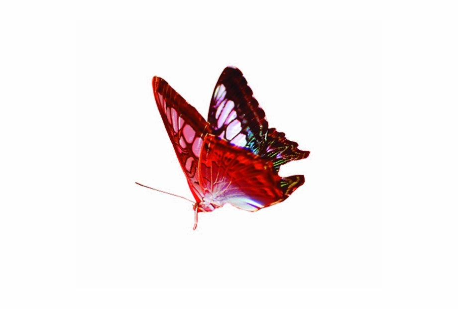Red Butterfly Png Image Background.