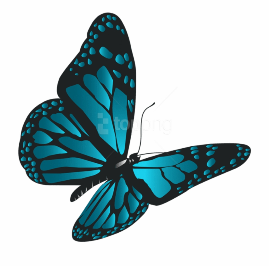 Free Png Download Blue Butterfly Png Clipart Png Photo.