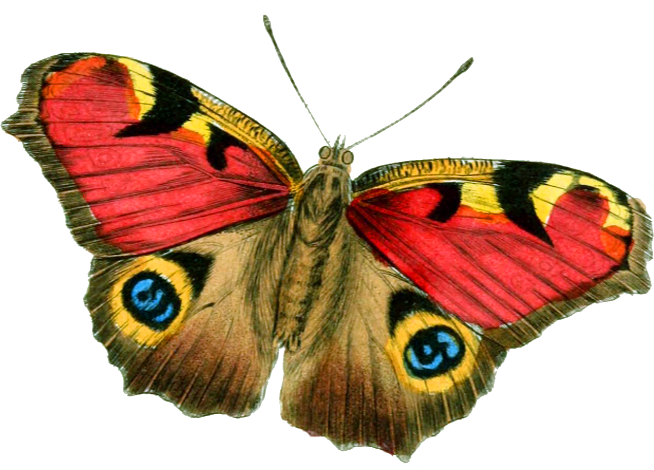 Butterfly PNG image, free picture download.