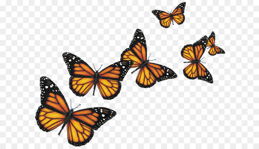 Monarch Butterflytransparent png image & clipart free download.
