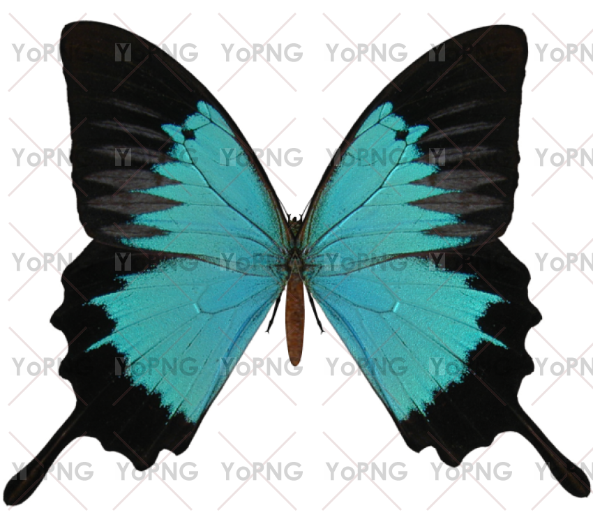Butterfly png image free download for design.