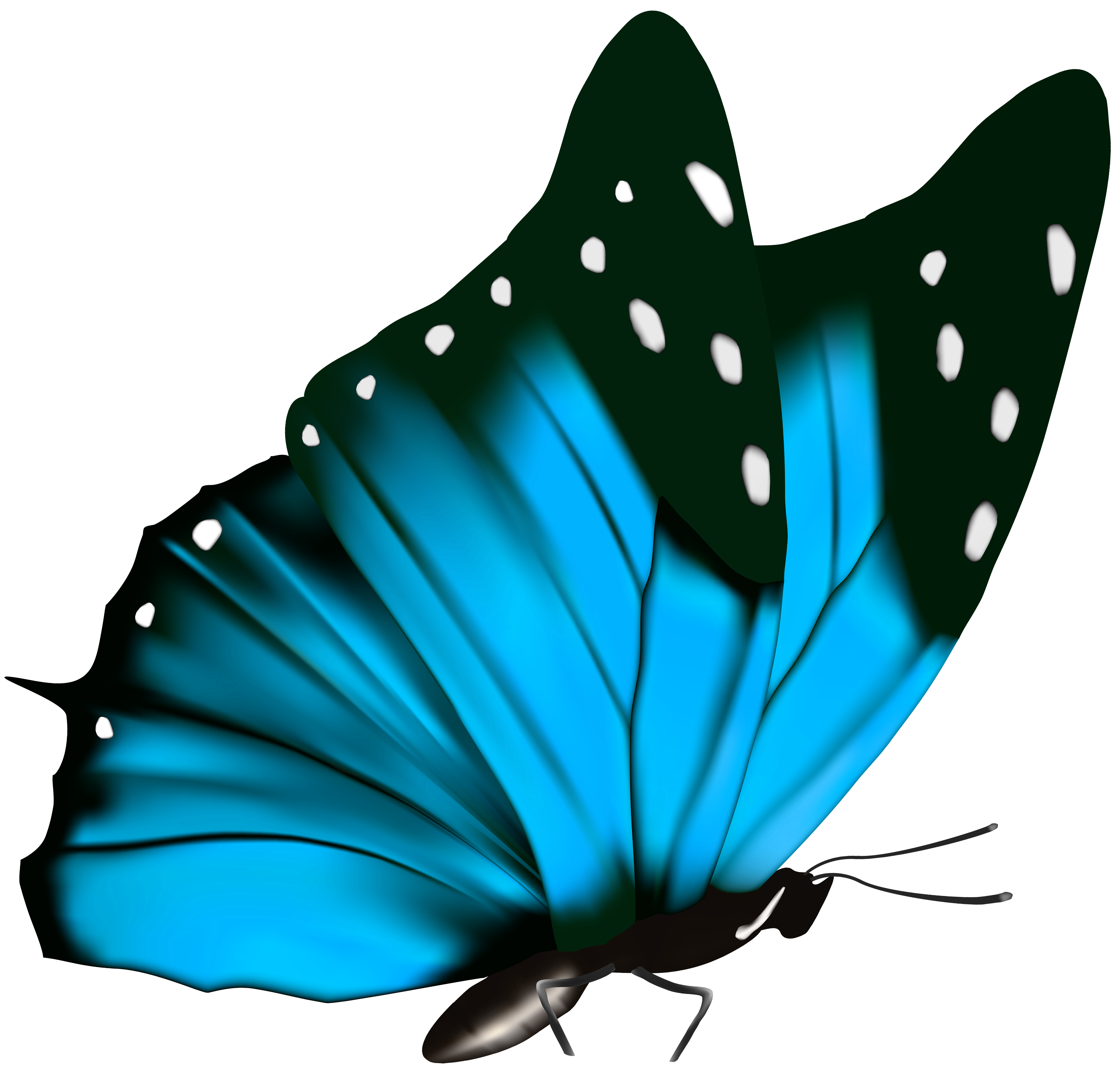 Butterfly PNG Clipart Image.