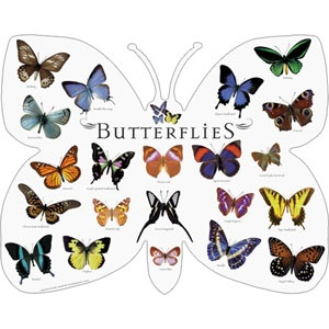 1000+ images about Butterfly stuff on Pinterest.