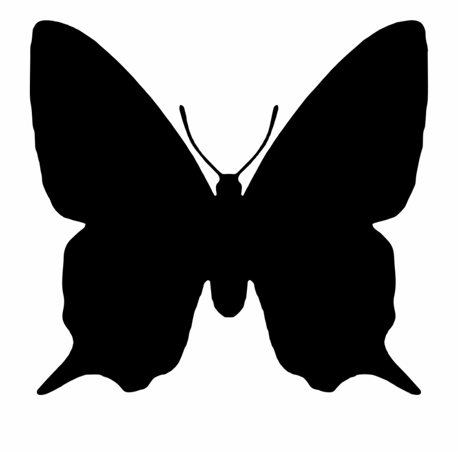 Insect Animal Shape.