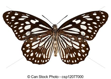 "Stock Photography of Butterfly species Tirumala limniace ""Blue."
