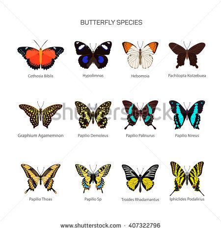 Butterfly Species Stock Vectors, Images & Vector Art.