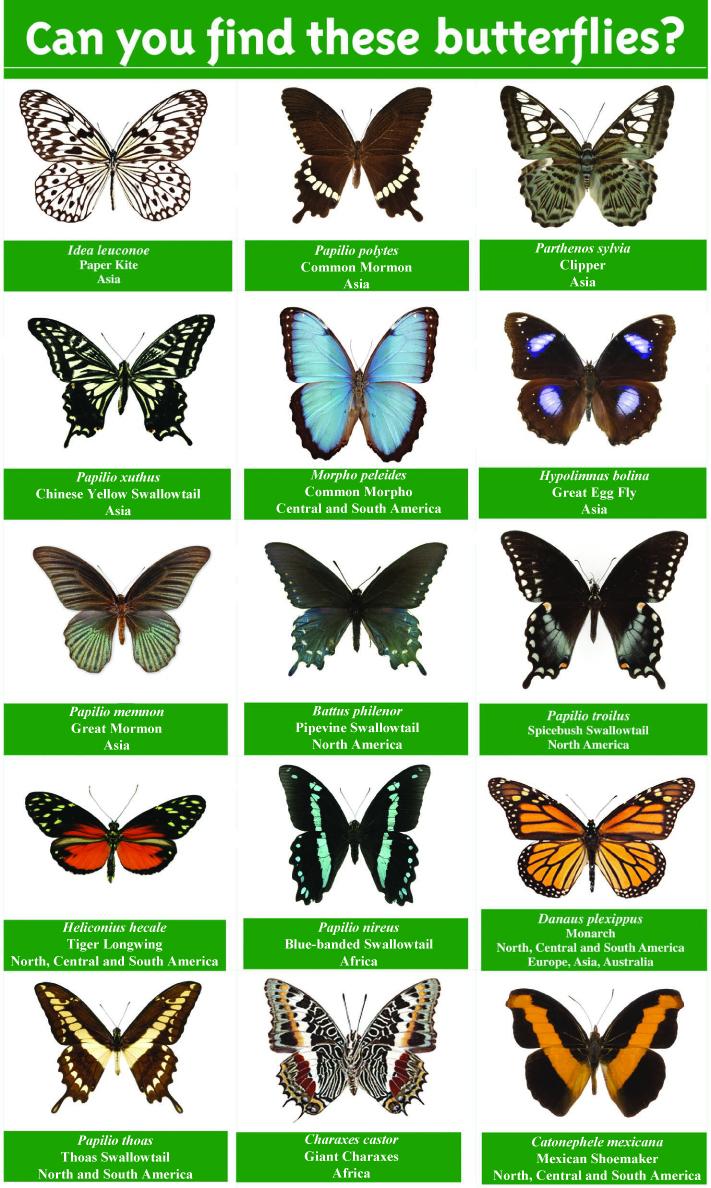 Butterflies + Plants.
