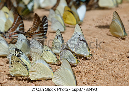 Stock Photographs of Diversity of butterfly species,Butterfly.