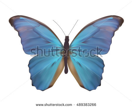 Butterfly Clip Art Species Blue Morpho Stock Vector 215103049.