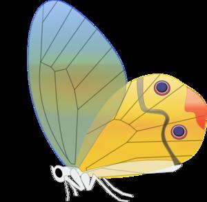 Transparent Butterfly Clip Art at Clker.com.