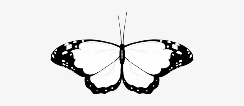 Wedding Clipart Butterfly.