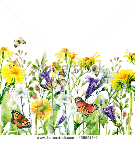 Butterfly Weed Stock Photos, Royalty.