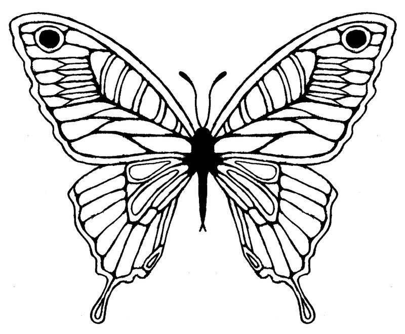 Butterfly Wing Drawing.