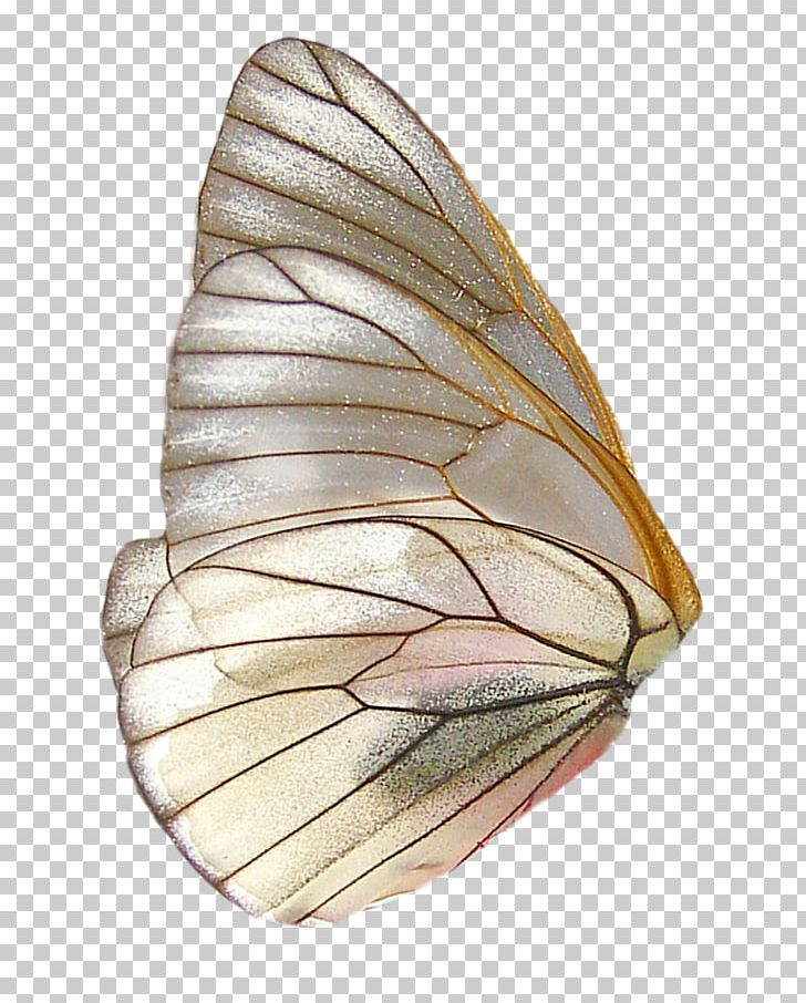 Butterfly Wing PNG, Clipart, Animals, Cartoon, Cartoon Wings.