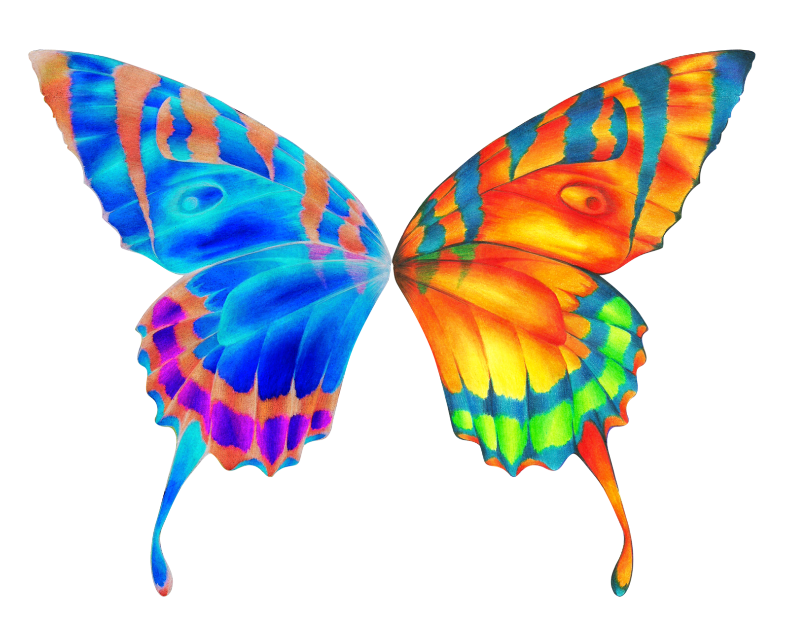 Beautiful butterfly wings clipart.