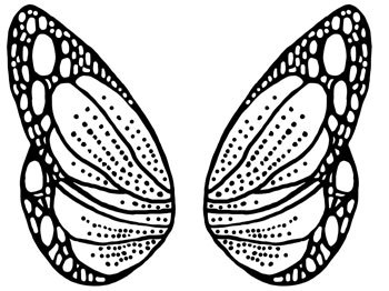 Butterfly Wing Template. viewing gallery for dragonfly wing.