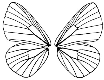 Clipart butterfly wings.