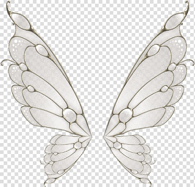 Gray and white butterfly wings illustration, Butterfly Wing.