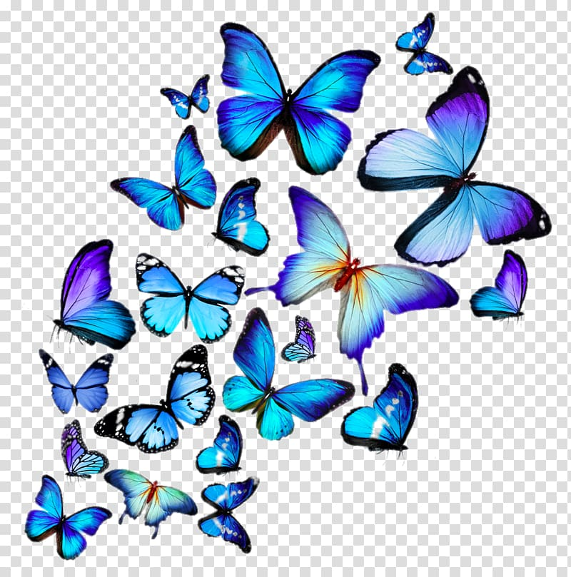 Hd butterflies transparent background PNG clipart.