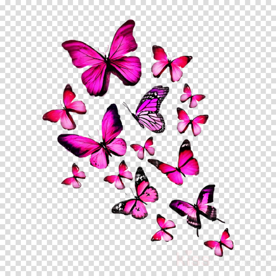 butterfly pink violet moths and butterflies purple clipart.