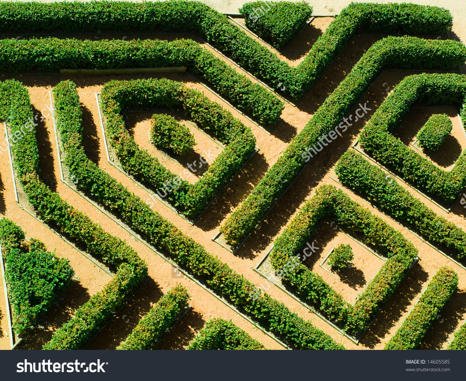 Ornamental Garden Hedges Buxus Sempervirens Labyrinth Stock Photo.