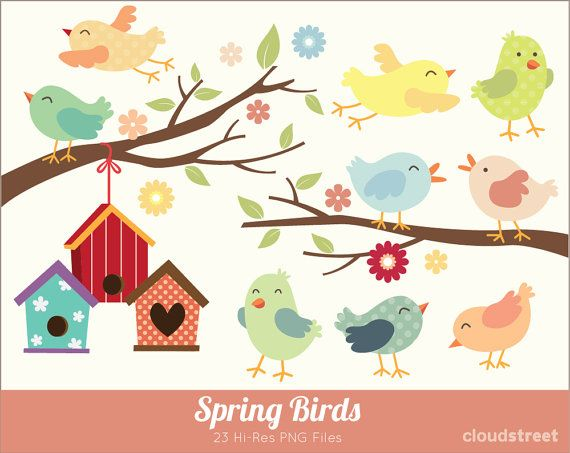buy 2 get 1 free Spring Birds Clipart for personal and commercial.