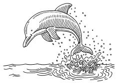 Jumping Dolphin Sea Water Splash Drawing vector art.