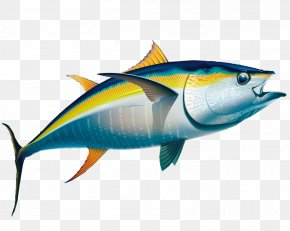 Bycatch Images, Bycatch Transparent PNG, Free download.