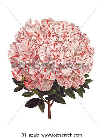 Deciduous shrub Illustrations and Clipart. 75 deciduous shrub.