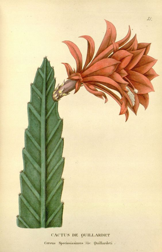 Cactus and Illustrations on Pinterest.