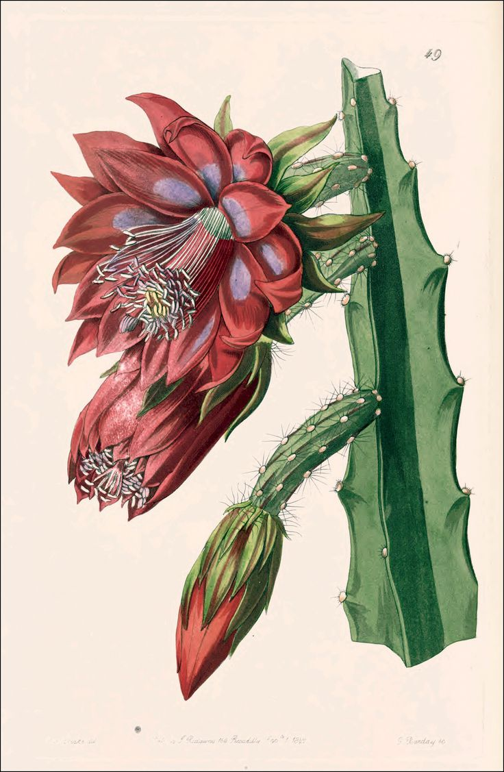 1000+ images about Flower Illustrations on Pinterest.