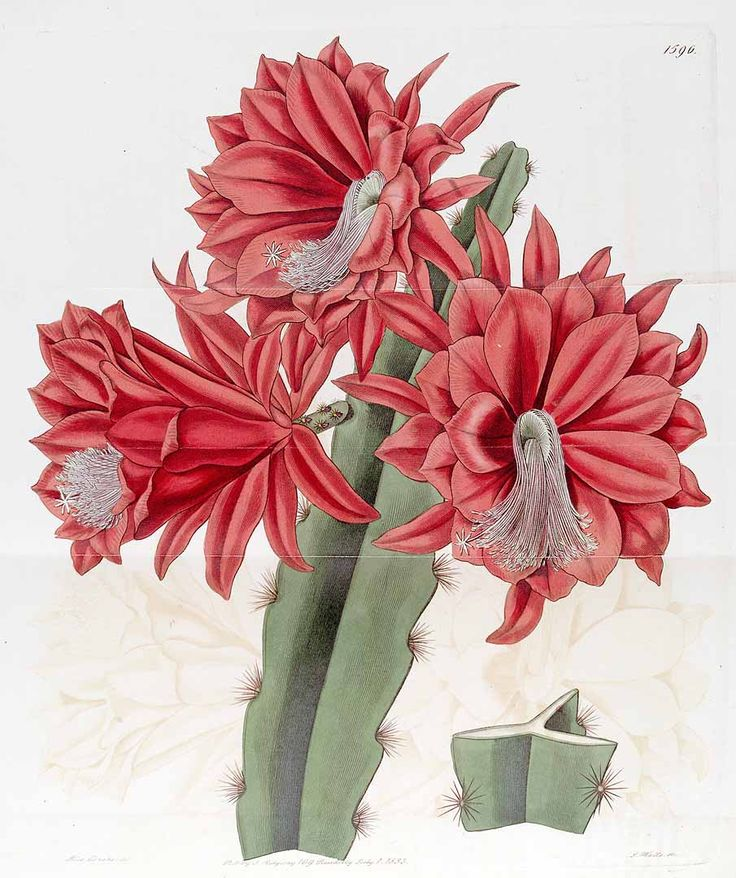 1000+ images about cactus pinturas on Pinterest.
