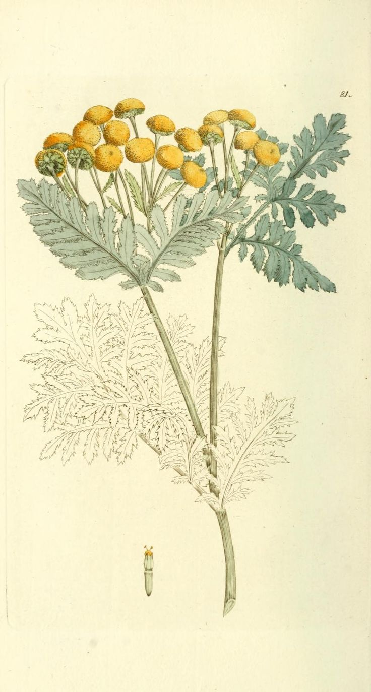 1000+ images about Botanical Prints & Art on Pinterest.
