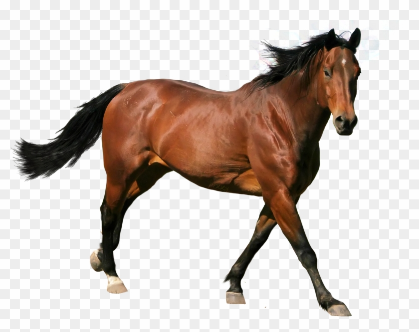 Caballo Png.