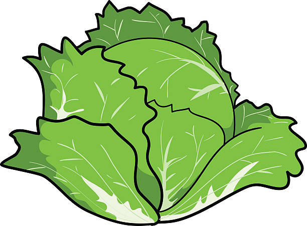 Best Cabbage Soup Illustrations, Royalty.