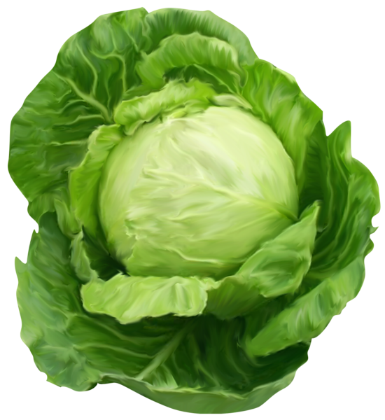 Cabbage Clipart Picture.