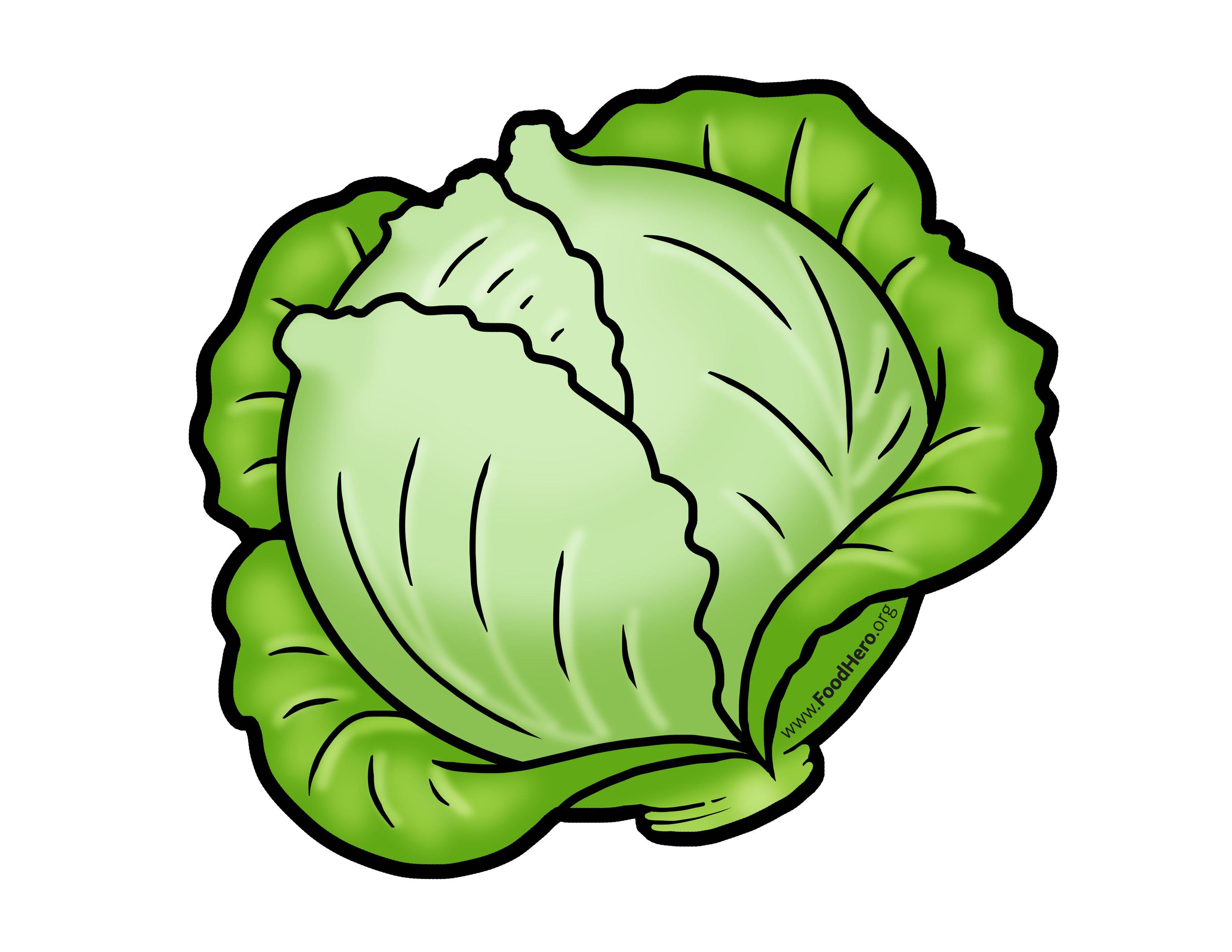 Cabbage illustration. Foodhero.org. #bullentinboards #schoolart.
