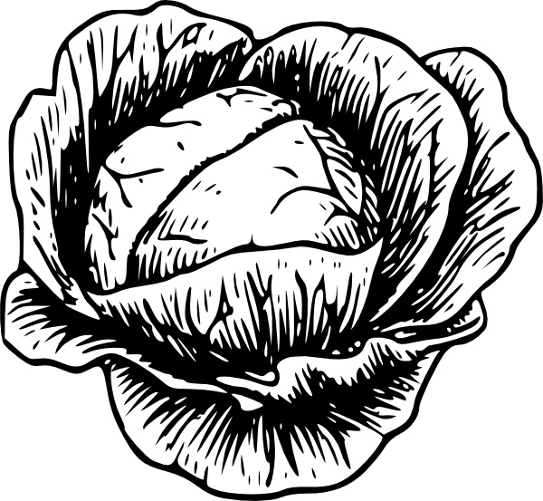 Cabbage clip art Free vector in Open office drawing svg ( .svg.
