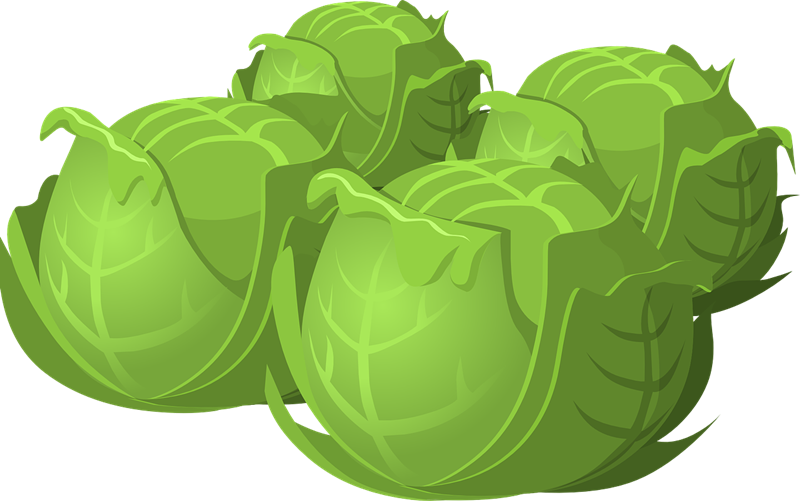 Free to Use & Public Domain Cabbage Clip Art.