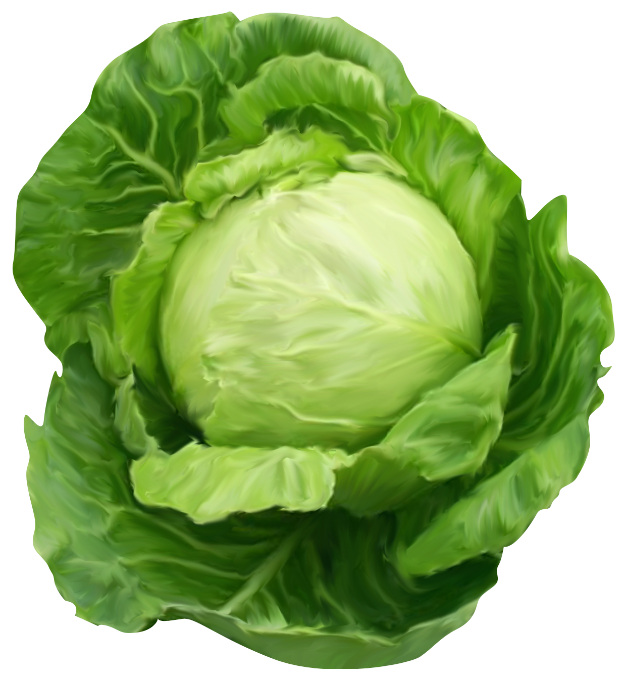 Cabbage_Clipart_Picture.png?m=1399672800.