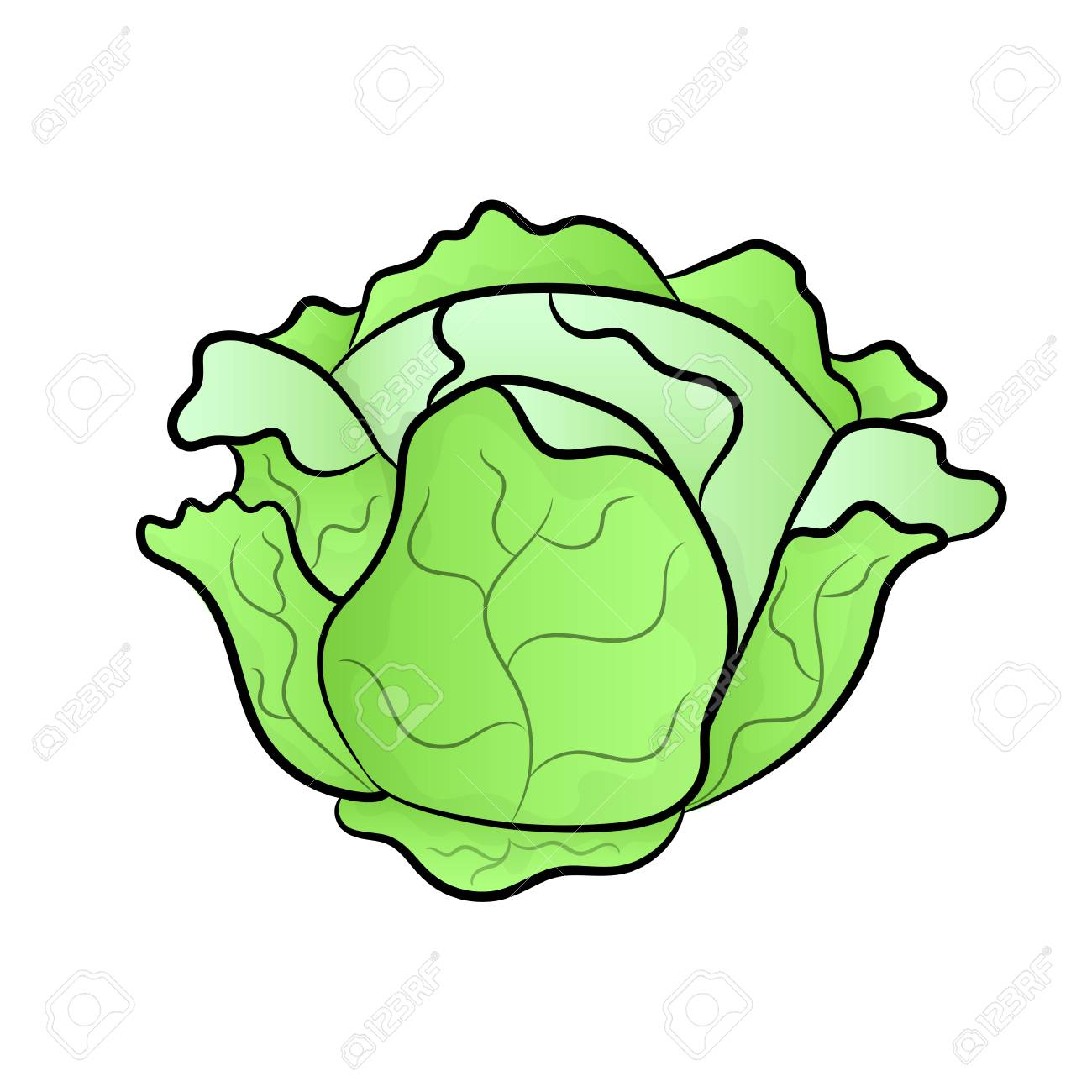 Vector green liner cabbage. Cabbage clipart. Vector vegetable.