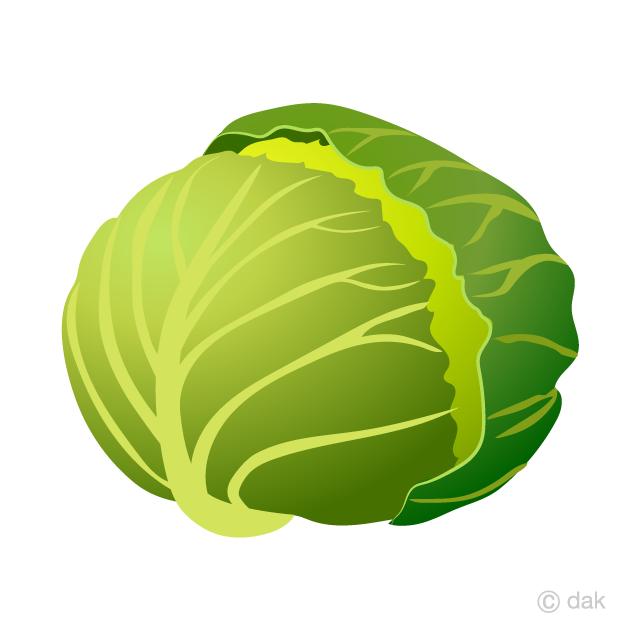 Cabbage Clipart Free Picture Illustoon.