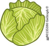 Cabbage Clip Art.