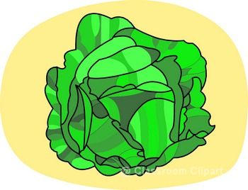 Cabbage cliparts.