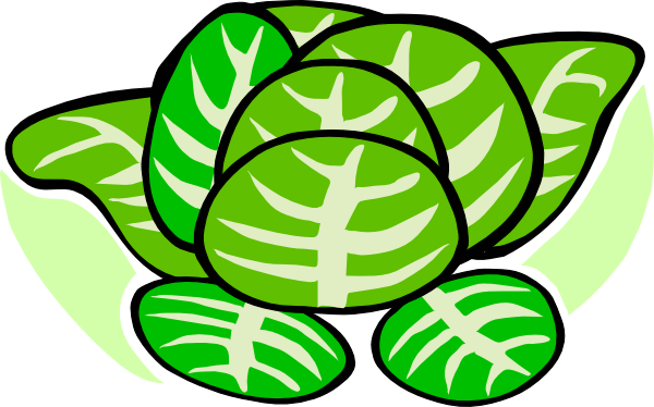 Cabbage Plant Clipart.