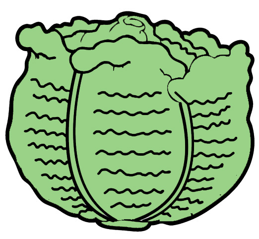 Cabbage 20clipart.