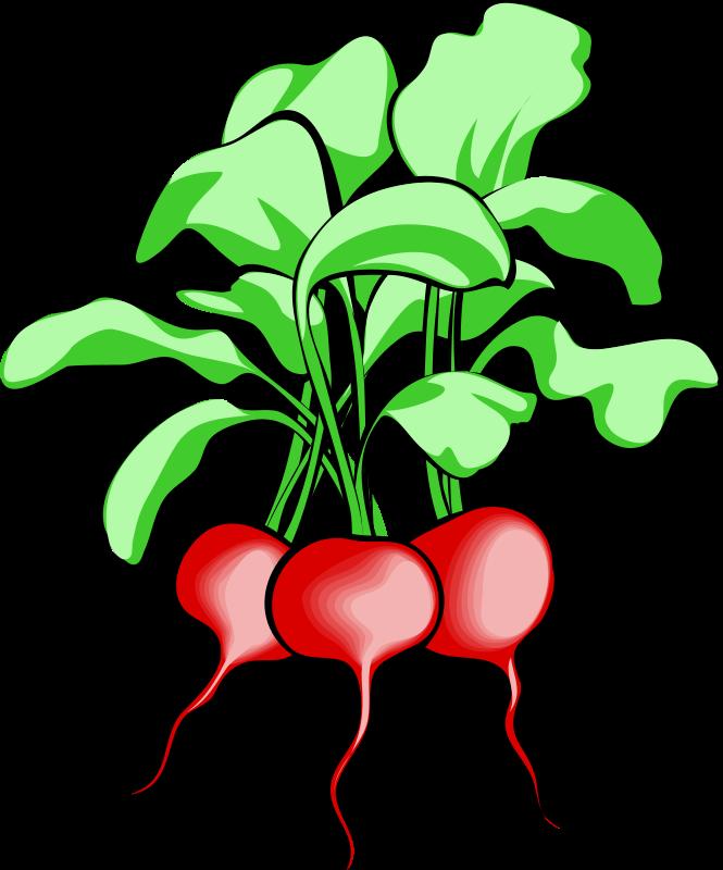 Free Vegetable Graphics.